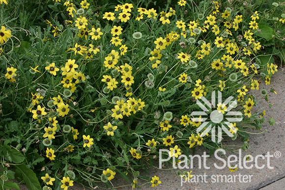 Plant Select Smart Plant Choices Plant Select