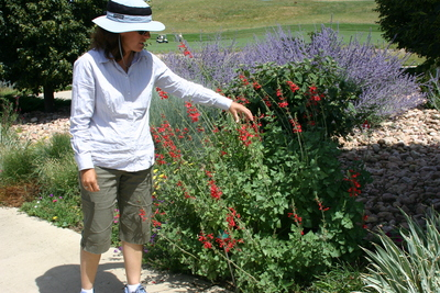 Salvia darcyi Pscarl Plant Select