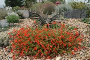 Fire Safe Landscaping Favorites Plant Select