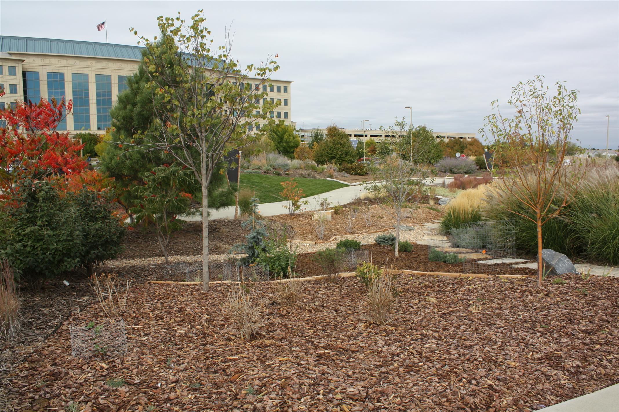 Aurora Water-wise Garden | Plant Select