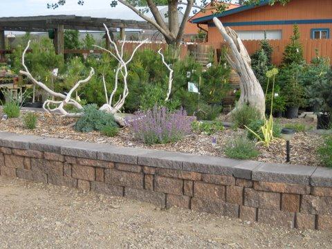 Cliffrose Your High Desert Gardens Cortez Plant Select