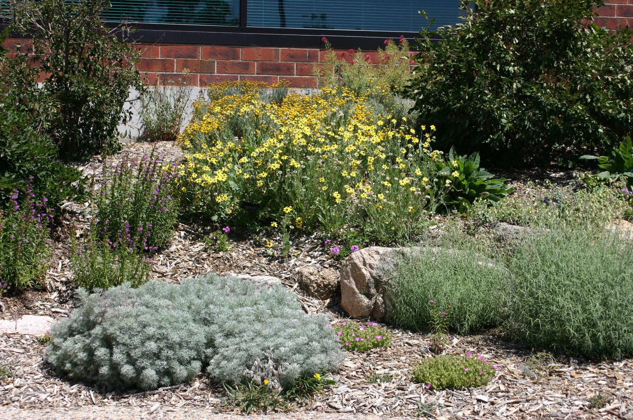 Garden Bush: Colorado Springs Utilities Xeriscape Demonstration Garden