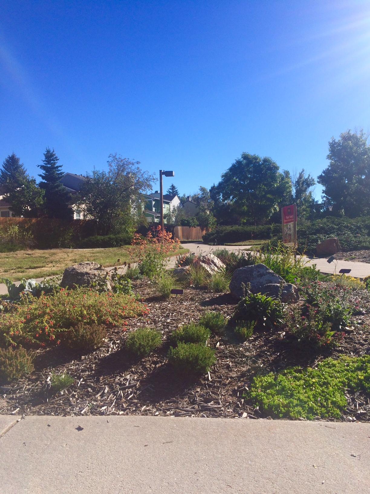 Meadow Ridge Park Playground Colorado Springs Plant Select